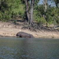 Botswana2015 - Botswana2015_110.jpg