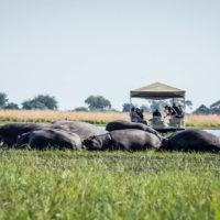 Botswana2015 - Botswana2015_111.jpg