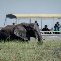 Botswana2015 - Botswana2015_114.jpg