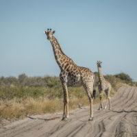 Botswana2015 - Botswana2015_136.jpg