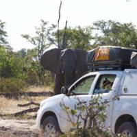 Botswana2015 - Botswana2015_138.jpg