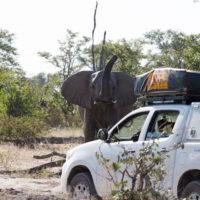 Botswana2015 - Botswana2015_139.jpg