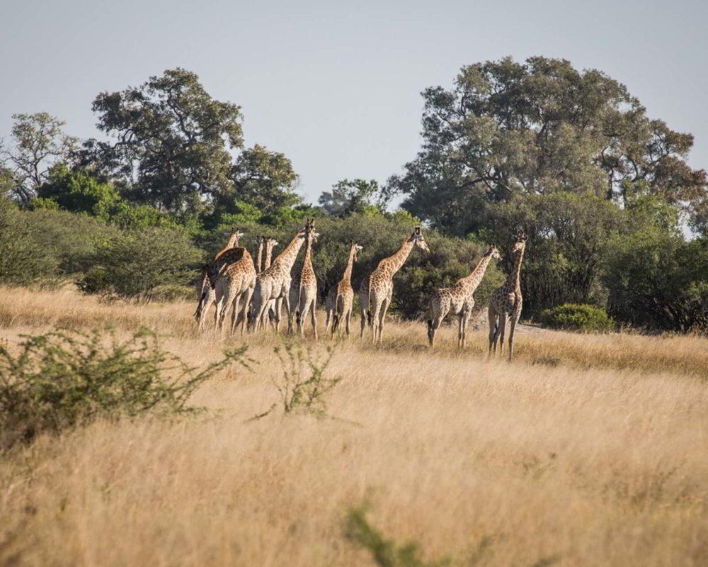 Botswana2015 - Botswana2015_141.jpg