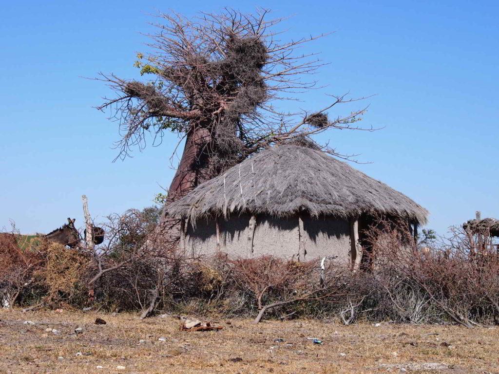 Botswana2015 - Botswana2015_199.jpg