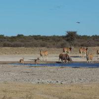 Botswana2015 - Botswana2015_73.jpg