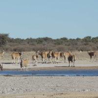 Botswana2015 - Botswana2015_74.jpg