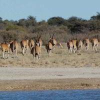 Botswana2015 - Botswana2015_75.jpg