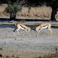 Botswana2015 - Botswana2015_88.jpg