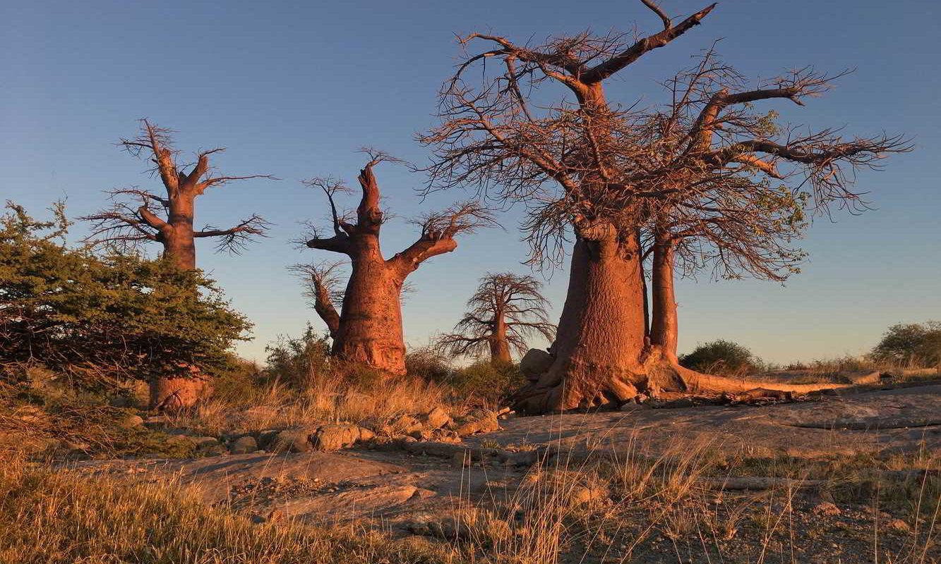 Botswana2017 - Botswana2017_14.jpg