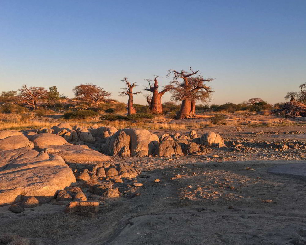 Botswana2017 - Botswana2017_25.jpg