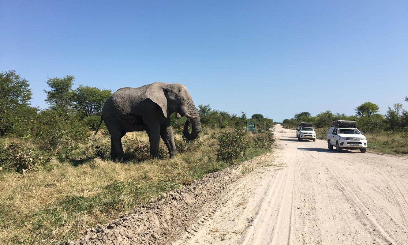 Botswana2017 - Botswana2017_54.jpg