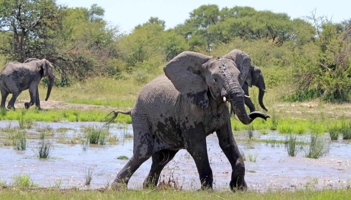 Botswana_2016_poramokra - Botswana2016_poramokra_53.jpg