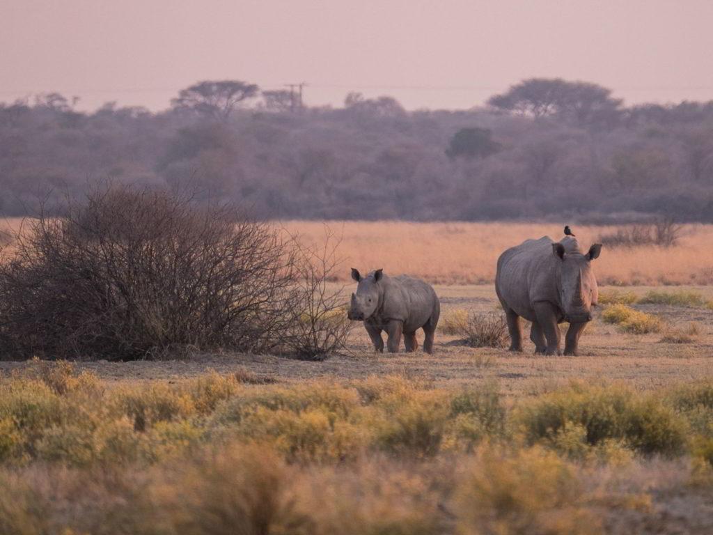 Botswana_pora_sucha - Botswana_pora_sucha_61.jpg