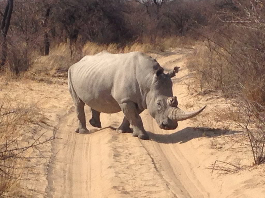 Botswana_pora_sucha - Botswana_pora_sucha_99.jpg