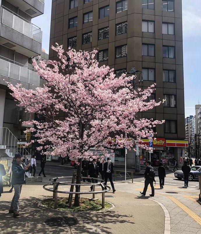 Japonia2019 - Wyprawa_do_Japonii_2019_214.jpg