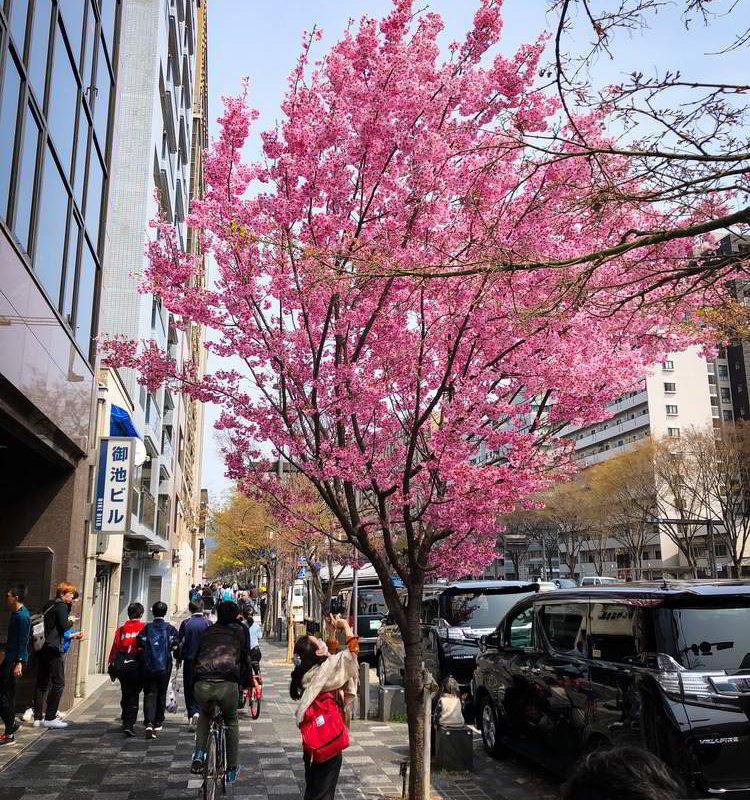 Japonia2019 - Wyprawa_do_Japonii_2019_232.jpg