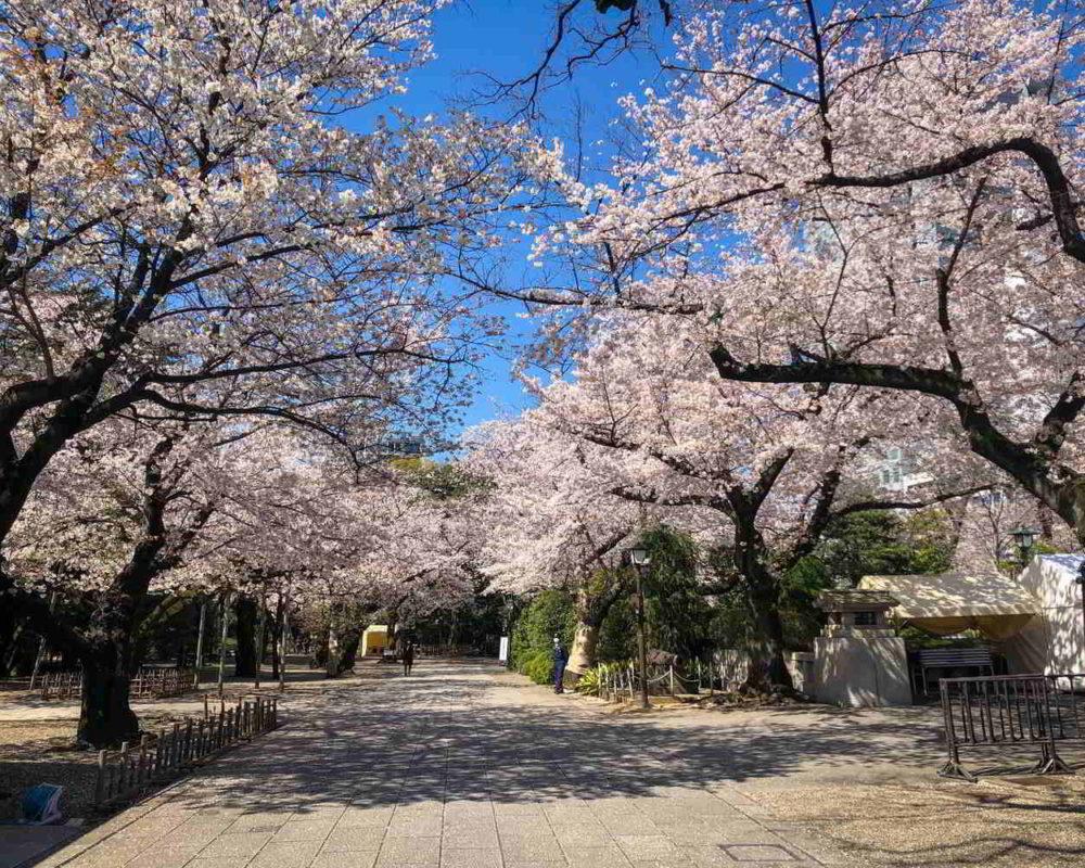Japonia2019 - Wyprawa_do_Japonii_2019_285.jpg