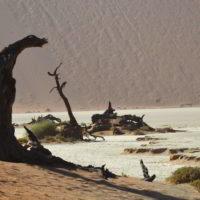 Namibia2018jesien - Wyprawa_do_Namibia_jesien_2018_121.jpg