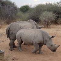 Namibia2018jesien - Wyprawa_do_Namibia_jesien_2018_59.jpg
