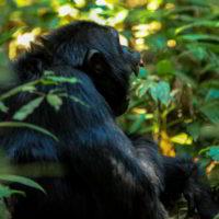 Szympanse_Story - Szympanse_story_10.jpg
