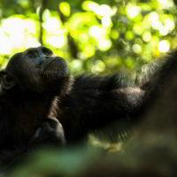 Szympanse_Story - Szympanse_story_11.jpg