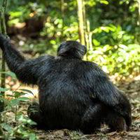 Szympanse_Story - Szympanse_story_12.jpg
