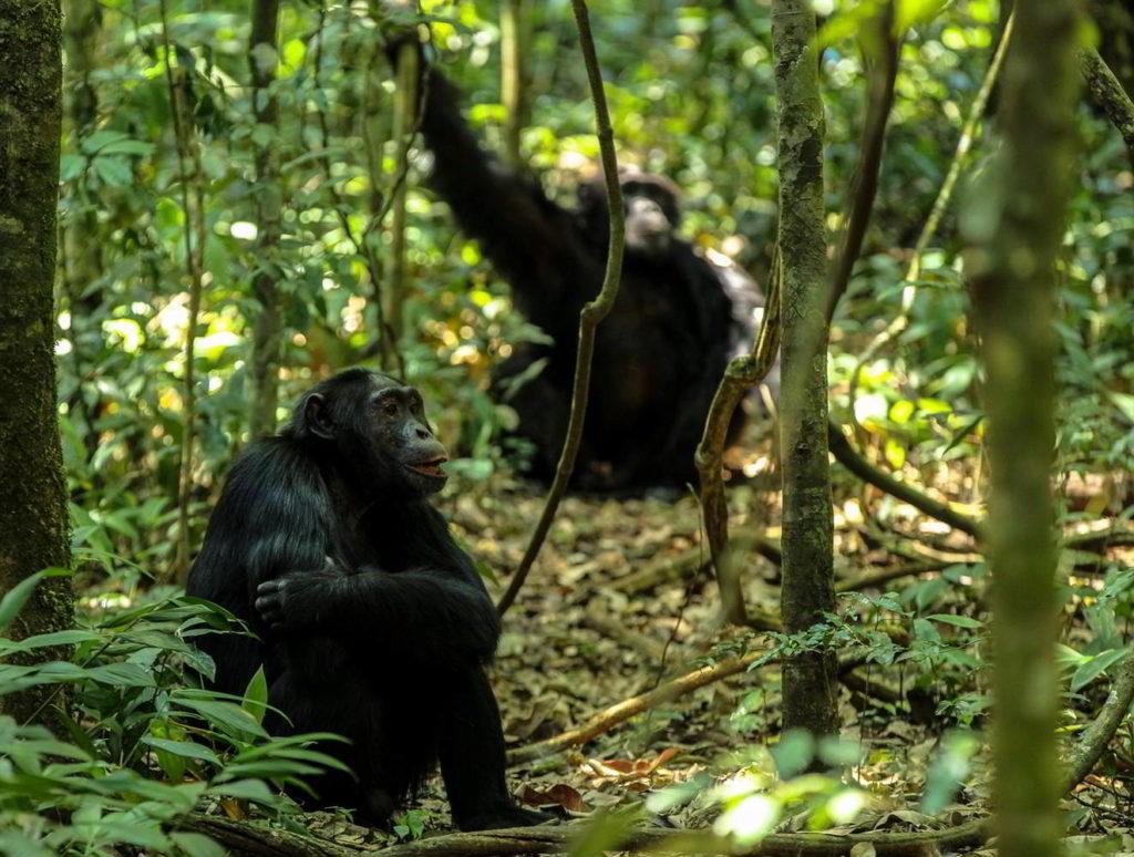 Szympanse_Story - Szympanse_story_13.jpg