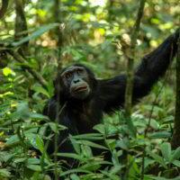 Szympanse_Story - Szympanse_story_14.jpg