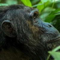 Szympanse_Story - Szympanse_story_15.jpg