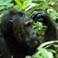 Szympanse_Story - Szympanse_story_16.jpg