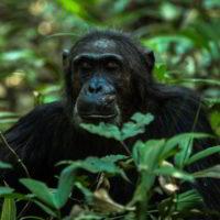 Szympanse_Story - Szympanse_story_17.jpg