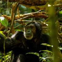 Szympanse_Story - Szympanse_story_4.jpg