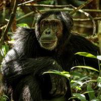 Szympanse_Story - Szympanse_story_5.jpg