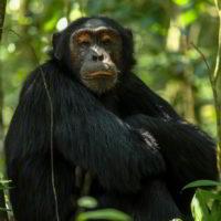 Szympanse_Story - Szympanse_story_6.jpg