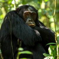 Szympanse_Story - Szympanse_story_7.jpg