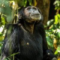 Szympanse_Story - Szympanse_story_8.jpg
