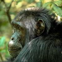 Szympanse_Story - Szympanse_story_9.jpg