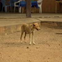 Togo2012 - Togo_2012_13.jpg