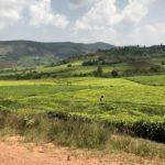 uganda2018 - Wyprawa_do_Ugandy_2018_97.jpg