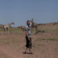 Zyrafy - zyrafy_w_afryce_30.jpg