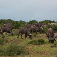 addo-elephant - addo_elephant_1.jpg