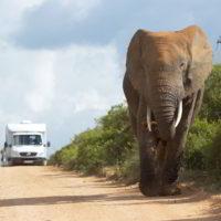 addo-elephant - addo_elephant_20.jpg