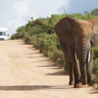 addo-elephant - addo_elephant_21.jpg