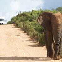 addo-elephant - addo_elephant_22.jpg