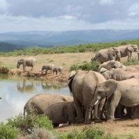 addo-elephant - addo_elephant_24.jpg