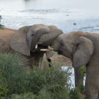 addo-elephant - addo_elephant_28.jpg