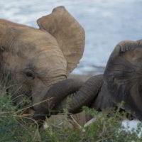 addo-elephant - addo_elephant_29.jpg