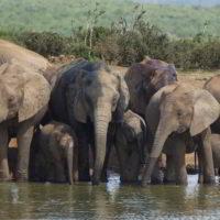 addo-elephant - addo_elephant_31.jpg