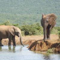 addo-elephant - addo_elephant_35.jpg