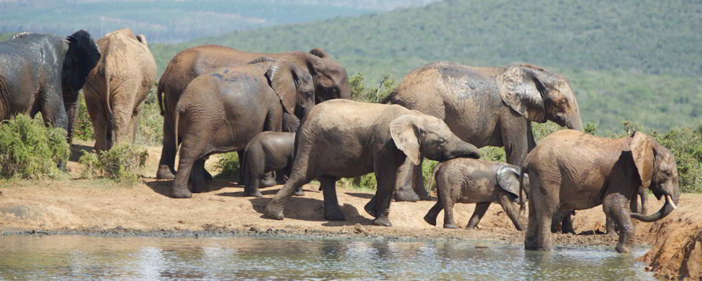 addo-elephant - addo_elephant_36.jpg